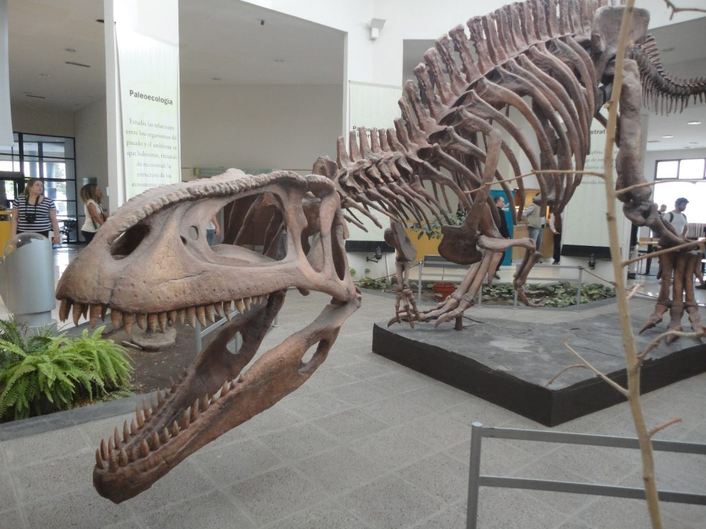 O Museu de Trelew é o mais completo da América do Sul em Paleontologia
